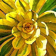 Succulents Posters - Sunburst Poster by Amy Vangsgard