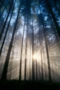 Spencer Prints - Sunburst In The Forest Print by Greg Vaughn - Printscapes