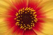 Stamen Digital Art - Sunburst by Malc McHugh