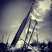 Statigram Posters - Suncatcher - Instagram Photo Poster by Marianna Mills