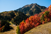 Fall Colors Photography Posters - Sundance Hill Fire Poster by La Rae  Roberts