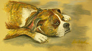 Boxer Pastels Framed Prints - Sunday Arts Fair Dog in a Mood Framed Print by Deborah Willard