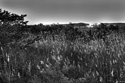Beach Photograph Prints - Sunday Morning at Robert Moses State Park Print by Jim Dohms