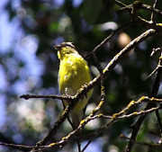 Canary Yellow Prints - Sunday Morning Visitor Print by Gail Salituri