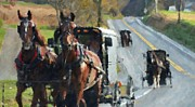 Pennsylvania Dutch Photos - Sunday Ride by Debbi Granruth