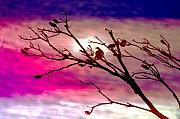 Branches Art - Sundown by Holly Kempe