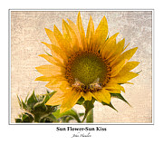 Pollenate Posters - Sunflower - Sun Kiss - Bordered Poster by John  Hamlon