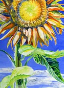Stalk Originals - Sunflower against blue sky by Sarah Denbigh