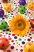 Dots Photos - Sunflower and colorful balls by Garry Gay