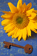 Wooden Table Framed Prints - Sunflower and skeleton key Framed Print by Garry Gay