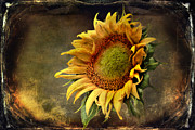 Sunflower Art Posters - Sunflower Art 2 Poster by Sari Sauls