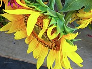 Jayne Locas - Sunflower at Farmers...