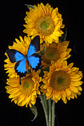 Insect Art - Sunflower bouquet  by Garry Gay