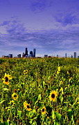 Chicago Skyline Photos - Sunflower Chicago by Emily Stauring