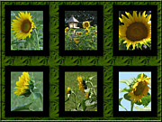 Natures Flower Garden Mixed Media Posters - Sunflower Collage Poster by Debra     Vatalaro