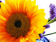 Photography By Colleen Kammerer Posters - Sunflower  Poster by Colleen Kammerer