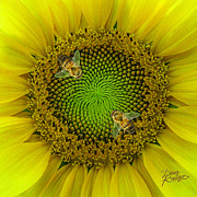 Sunflower Framed Prints - Sunflower Dance II Framed Print by Doug Kreuger