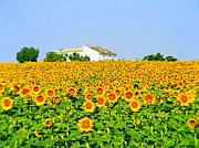 Josephine Johnston - Sunflower Farm - Photo