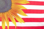 Sunflower Prints Prints - Sunflower Flag Print by James Bo Insogna