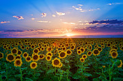 Field. Cloud Prints - Sunflower Print by Hansrico Photography