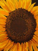 Stephen Ponting - Sunflower Heart