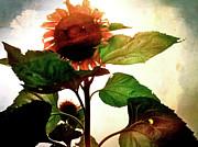 Kevyn Bashore - Sunflower II