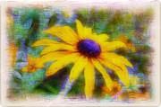 Disk Flowers Framed Prints - Sunflower Framed Print by Judi Bagwell