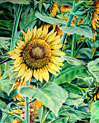 Mississippi Flowers Prints - Sunflower Print by Karl Wagner