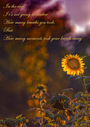 Motivational Sayings Framed Prints - Sunflower Moments Framed Print by Bill Tiepelman