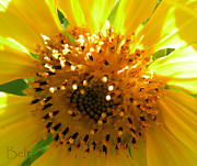 Flower Gardens Framed Prints - Sunflower No.16 Framed Print by Christine Belt