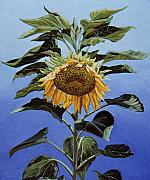 Framed Floral Art Framed Prints - Sunflower Nodding Framed Print by Jiji Lee