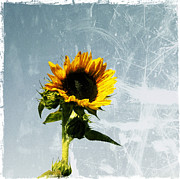 Sunflowers - Sunflower of Grunge by Cathie Tyler