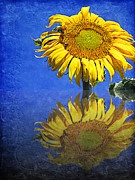 Blue Sky Mixed Media Framed Prints - Sunflower Reflection Framed Print by Andee Photography