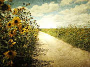 Field Framed Prints Prints - Sunflower Road Print by Andrea Hazel Ihlefeld