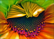 Colorful Sunflower Framed Prints - Sunflower Smoothie Framed Print by Gwyn Newcombe