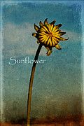 Melany Sarafis Digital Art Posters - Sunflower text Poster by Melany Sarafis