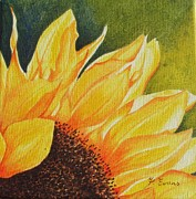 Frances Evans - Sunflower up Close