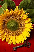Vivid Colour Metal Prints - Sunflower with old key Metal Print by Garry Gay