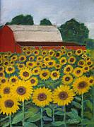 Floral Pastels Prints - Sunflowers and Red Barn Print by Linda Scharck