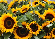 European Markets Posters - Sunflowers at the Market Poster by Carol Groenen