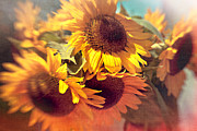 Selective Focus Framed Prints - Sunflowers Framed Print by Boston Thek Imagery