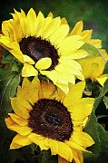 Yellow Sunflowers Prints - Sunflowers Print by Cathie Tyler