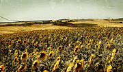 Agronomy Prints - Sunflowers Field  Print by Anja Freak