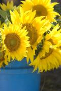 Market Originals - Sunflowers For Sale by Elvira Butler