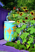Rain Barrel Posters - Sunflowers Framed in Purple Poster by Paul Mashburn