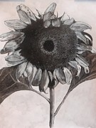 Gary L Bateman - Sunflowers