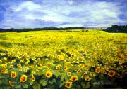 Fields Of Flowers Paintings - Sunflowers in Field by Ruth Bodycott