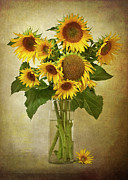 Colored Background Art - Sunflowers In Vase by  Leslie Nicole Photographic Art