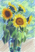 Colored Pencil Painting Metal Prints - Sunflowers Metal Print by Mary Helmreich