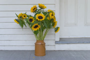 Andrew Kazmierski - Sunflowers on Porch
